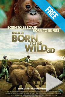 Born to be Wild -