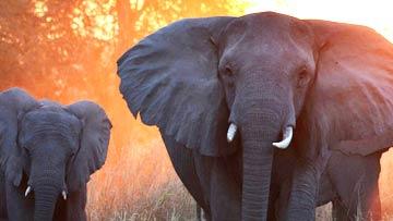 Gorongosa Park  Rebirth of Paradise - Lion Mystery Elephant Whisperer